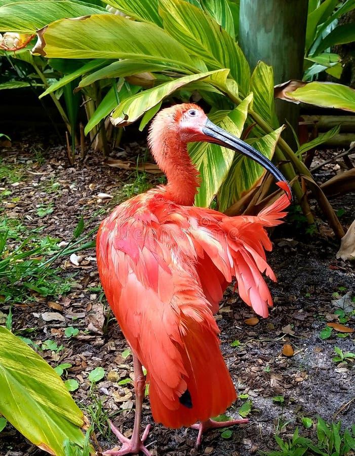 嘘粉红的鸟 库存照片
