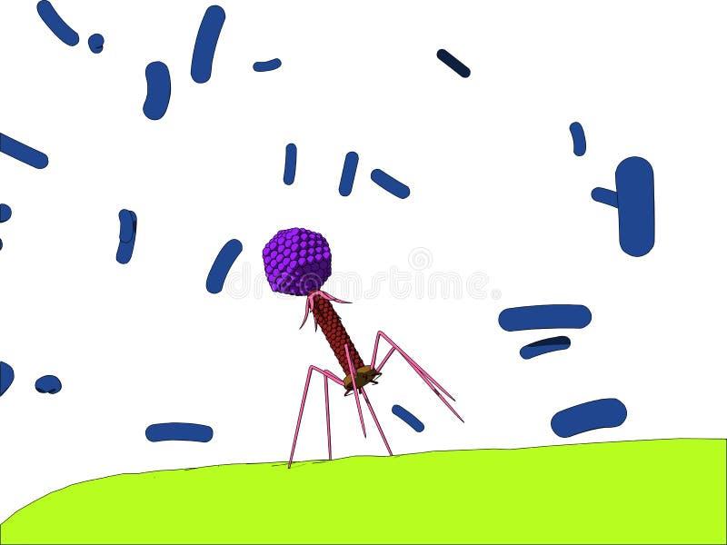 噬菌体 皇族释放例证