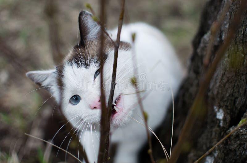 嚼猫 库存照片