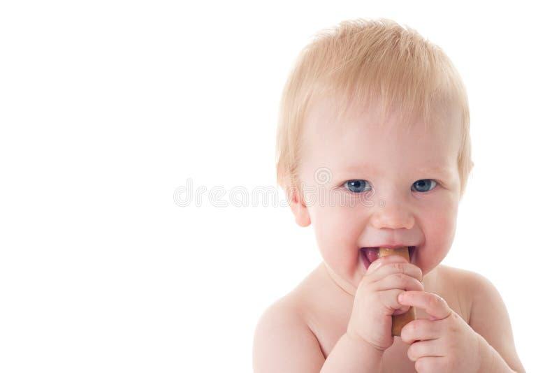 嚼面包干出牙的婴孩 库存图片