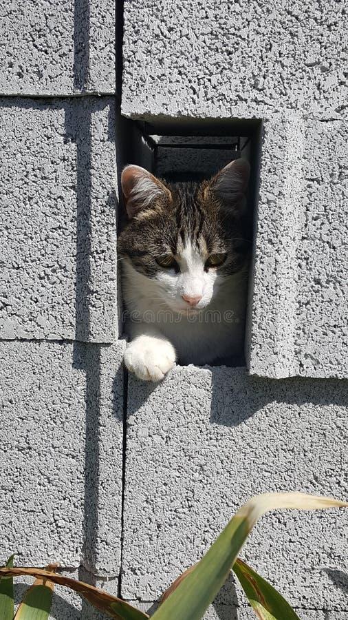 囚犯小猫 库存照片