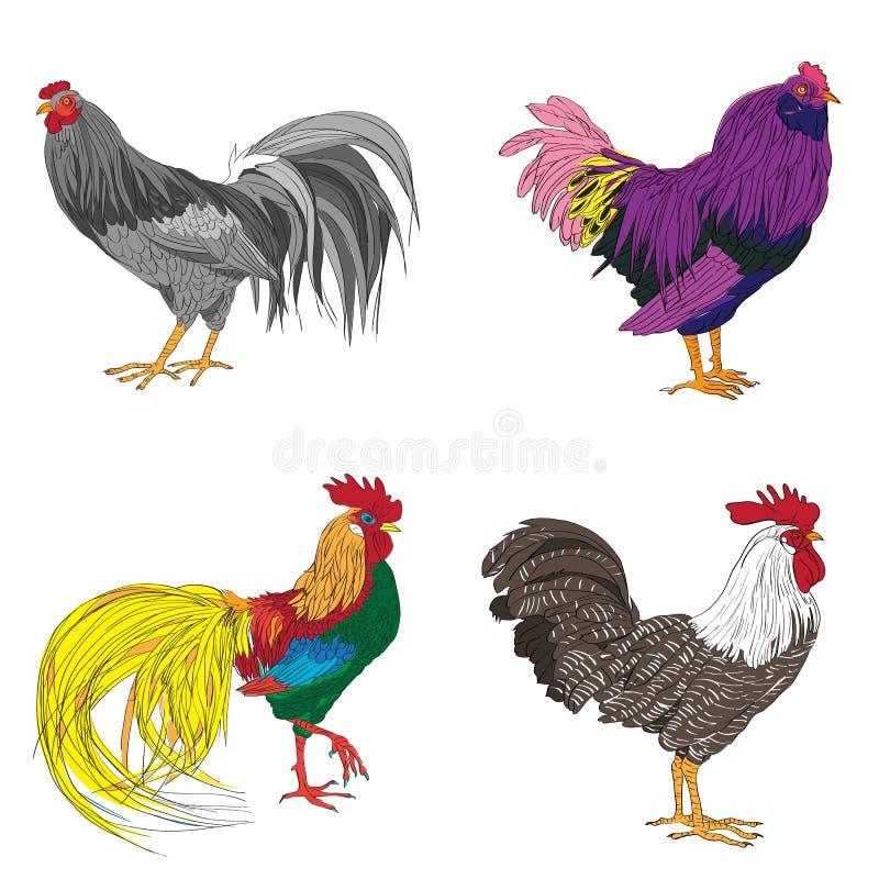 四个公鸡系列 皇族释放例证