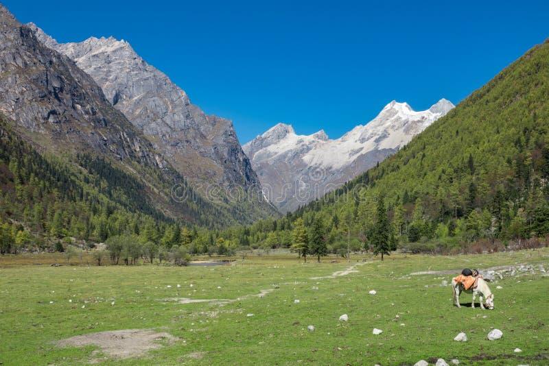 四个女孩山, Rilong,中国美好的风景看法  免版税图库摄影