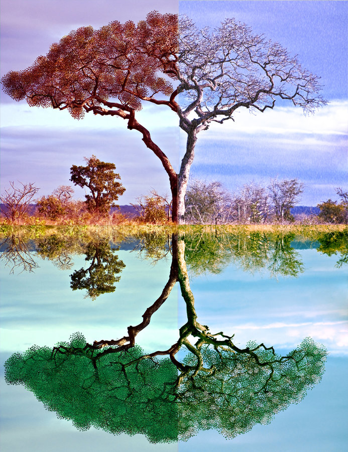 四个季节结构树 免版税库存图片