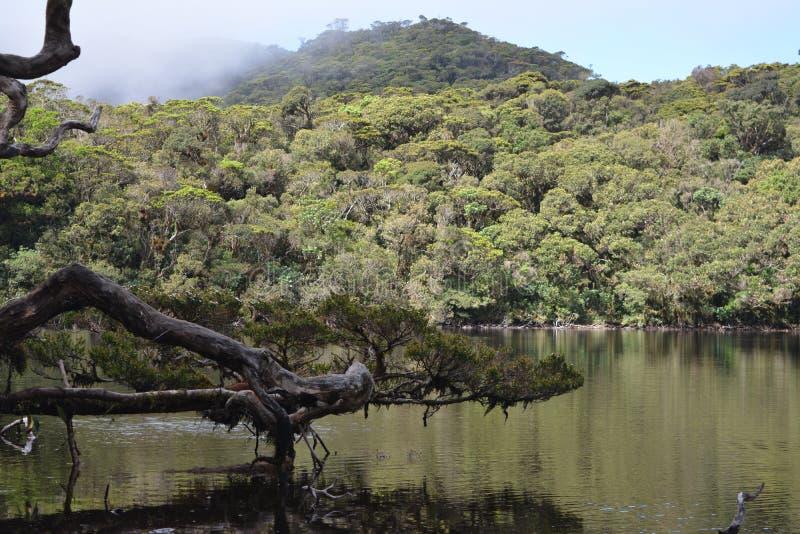 四个湖 库存照片