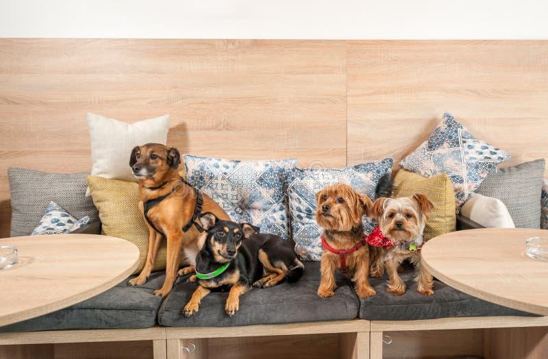 四个滑稽的逗人喜爱的狗前被放弃的无家可归者采取由好人和获得在枕头的乐趣在享有新的生活的宠物店 库存图片