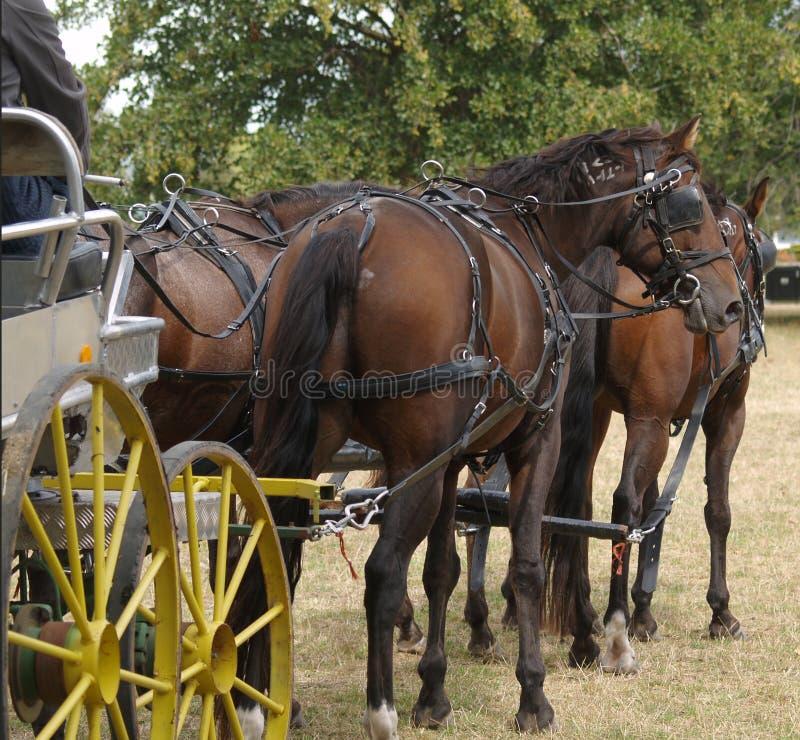 四匹马小组 免版税库存图片