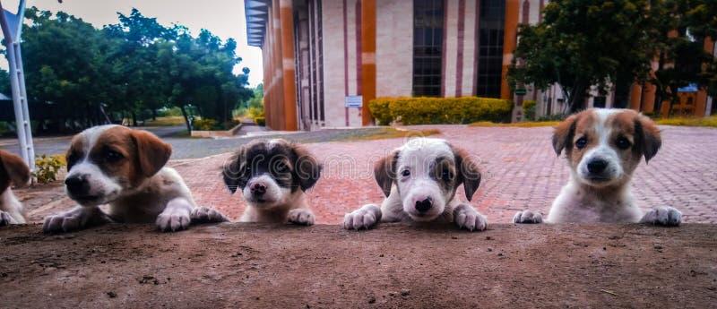 四只小狗 库存照片