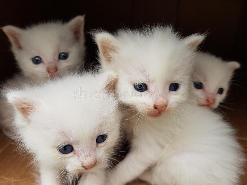 四只小猫,美丽的眼睛 库存照片