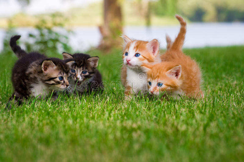 四只小的小猫在庭院里 库存照片