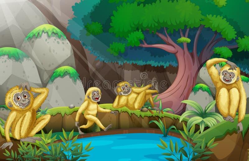 四只长臂猿在森林里 向量例证