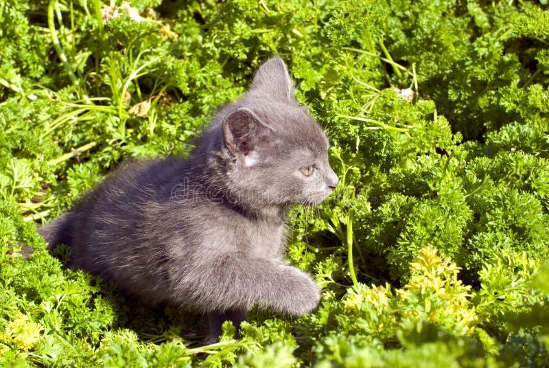 四处觅食草的小猫 免版税库存照片