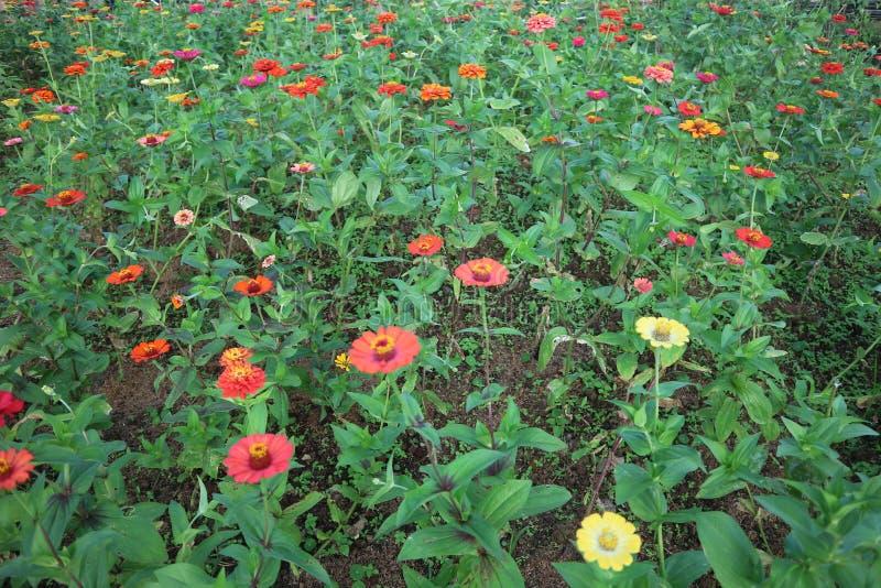 四季不断的庭院花床在春天 外面,户外 库存图片