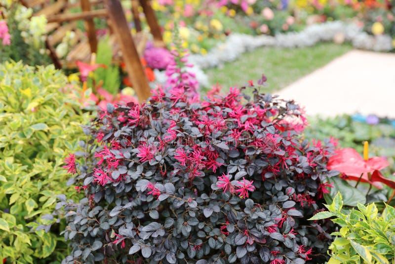 四季不断的庭院花床在春天 免版税库存图片