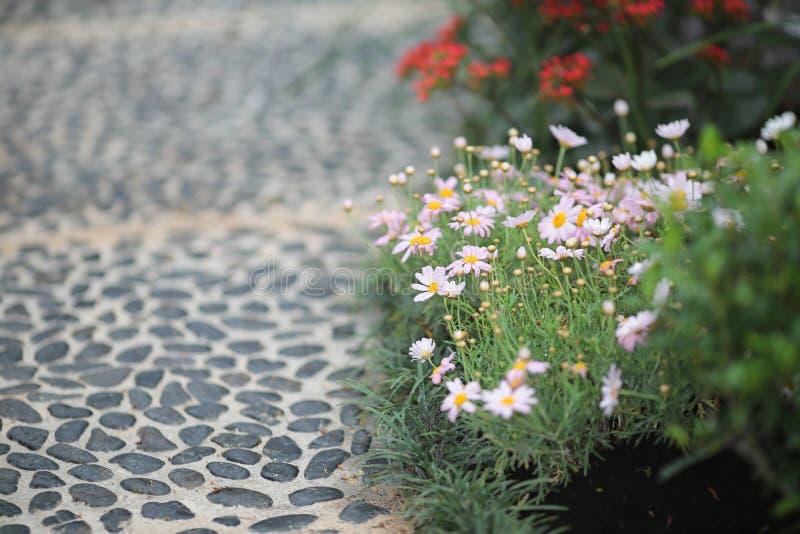 四季不断的庭院花床在花展的春天 库存照片