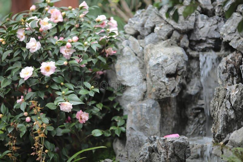 四季不断的庭院花床在花展的春天 图库摄影