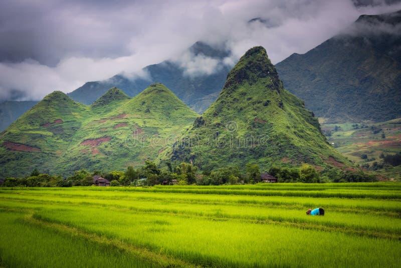 四小山在某处近的Mu Cang柴在有农场的越南 免版税图库摄影