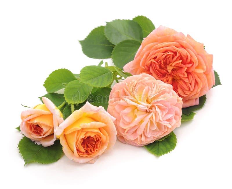 四朵橙色玫瑰 免版税库存照片