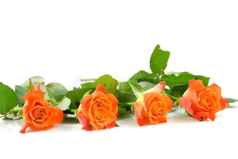 四朵玫瑰行 免版税库存图片