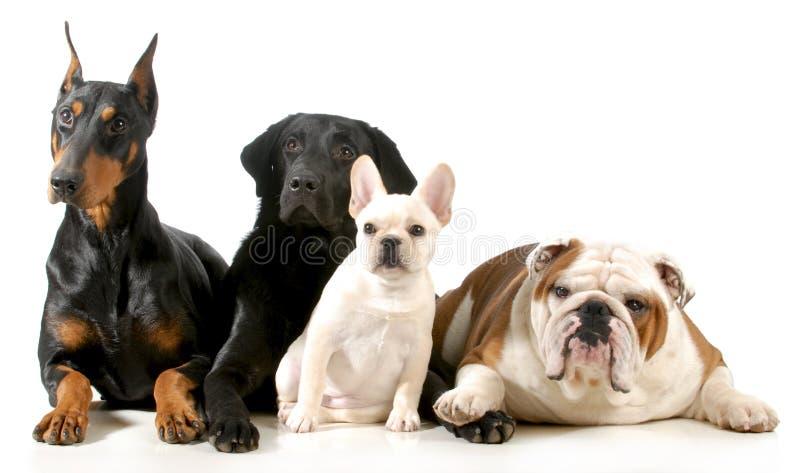 四条狗 库存图片
