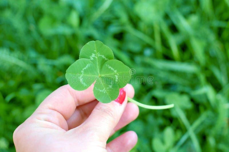 四片叶子三叶草在妇女的手,好运的标志上 库存照片