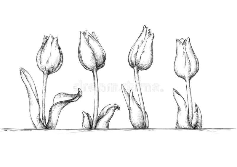 四简单的郁金香 向量例证