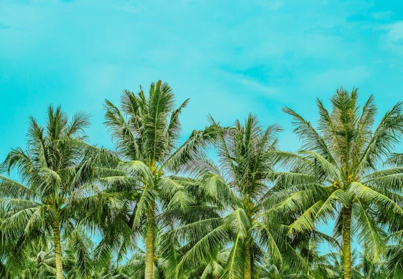 四豪华的棕榈树上面 免版税库存图片