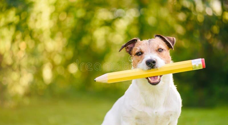 回到学校与拿着大铅笔的滑稽的狗的想法概念 库存照片