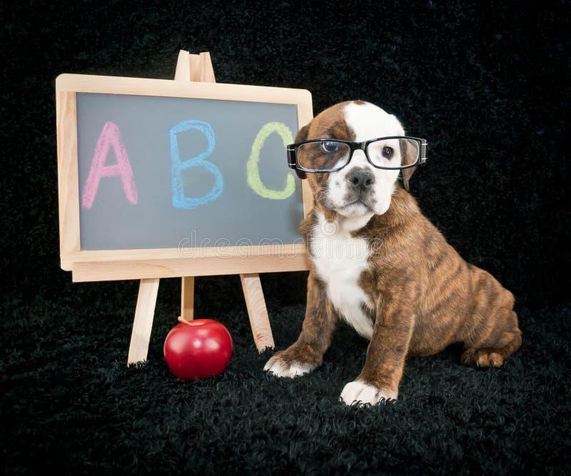 回到学校小狗 免版税图库摄影