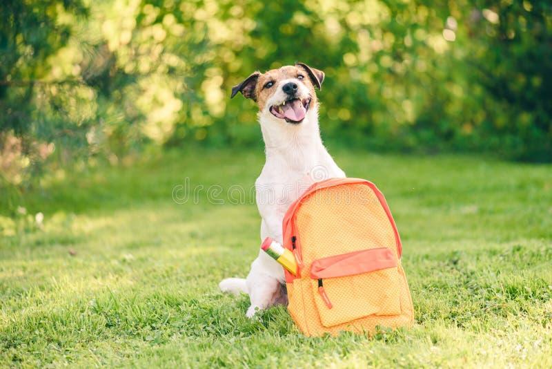 回到学校概念的欢迎与充分狗和背包文具 免版税库存照片