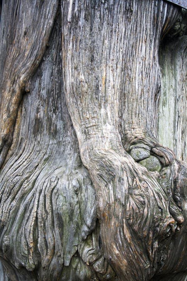 回到模式纹理结构树 库存照片