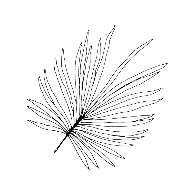 回归线的棕榈事假图表植物  印刷品黑白样式,异乎寻常的花卉密林 向量例证
