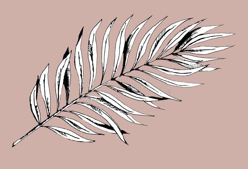 回归线的棕榈叶图表植物  在黑白样式在米黄背景,异乎寻常的花卉密林的印刷品 向量例证