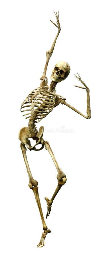 回报在白色的3D人的骨骼 库存图片