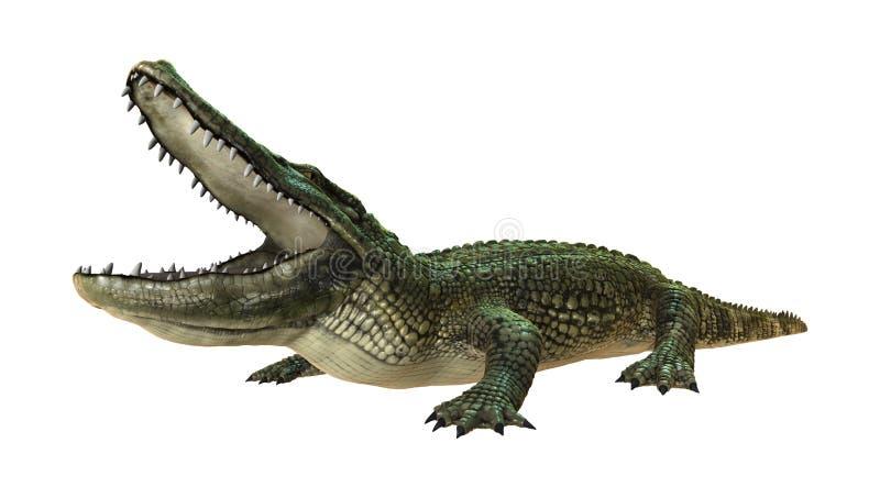 回报在白色的3D美国短吻鳄 库存例证