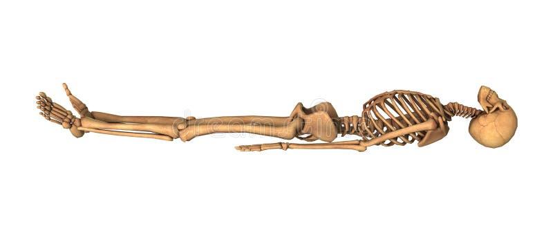 回报在笼子的3D人的骨骼在白色 皇族释放例证