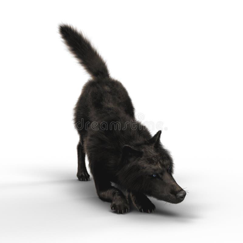 回报黑狼蹲下 向量例证