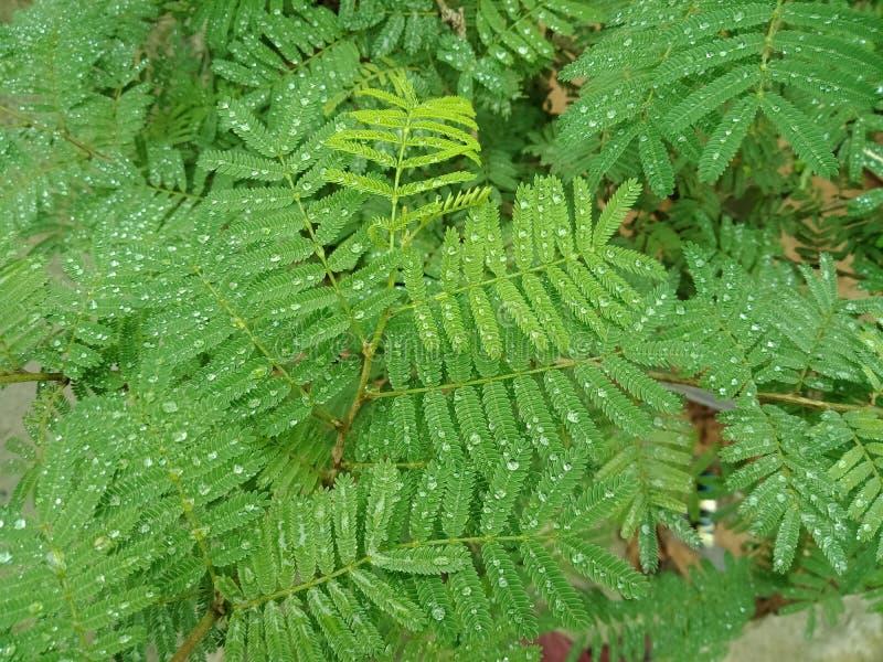 回顾有水下落的植物叶子 背景背景蜡染布手册褐色圆的设计桌面例证邀请介绍树荫棕褐色二使用墙纸网站 图库摄影