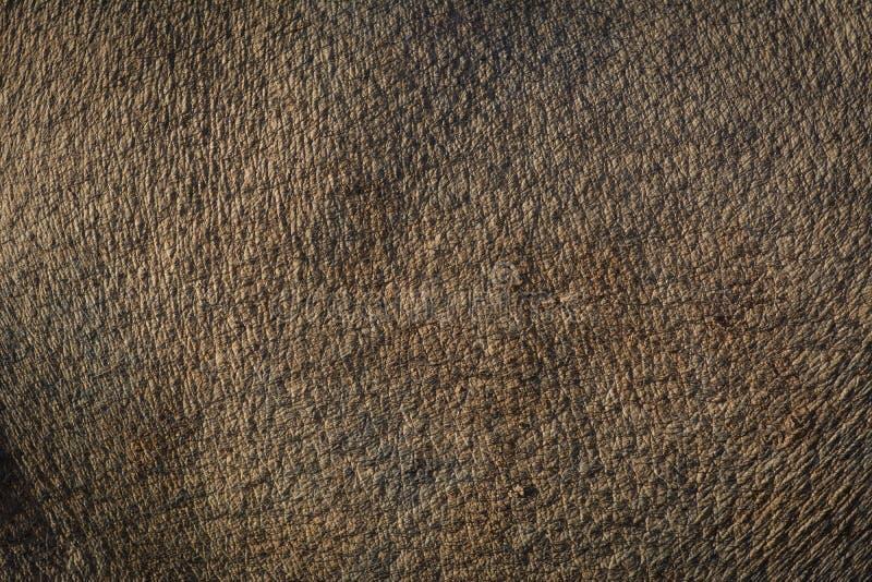 因为背景是使用的棕色罐头皮肤 免版税库存照片