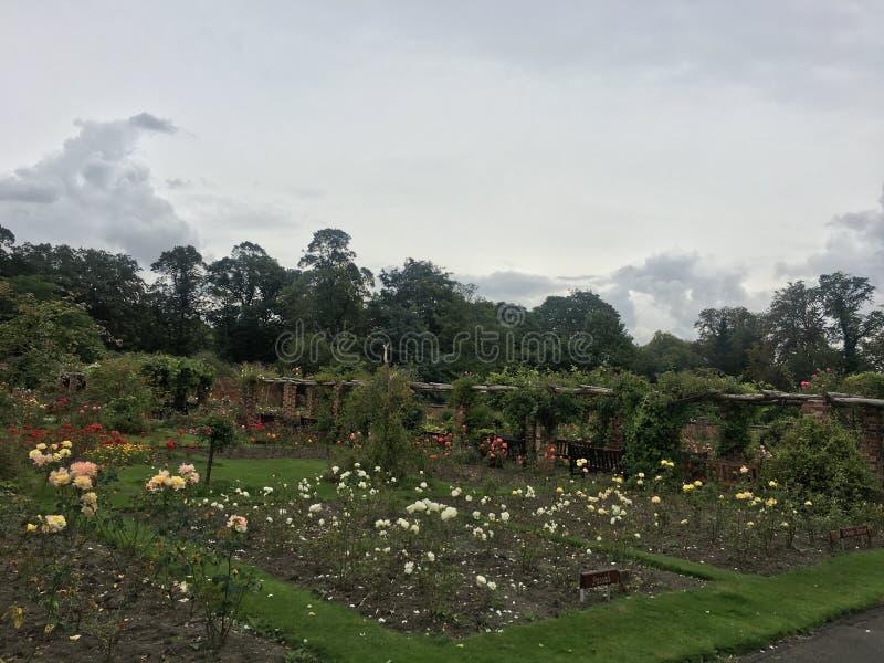 团结的Kingodm,约克夏, Thornes公园,玫瑰园 免版税库存照片