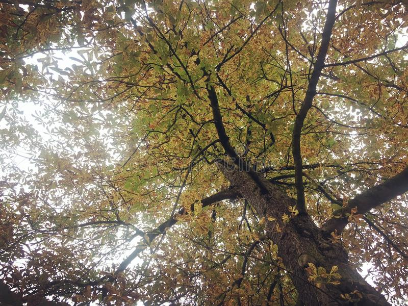 团结的Kingodm,约克夏, Thornes公园 库存图片