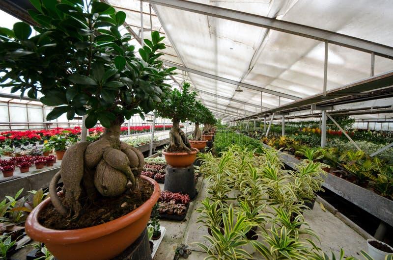 园林植物和盆景的耕种的温室 免版税库存图片