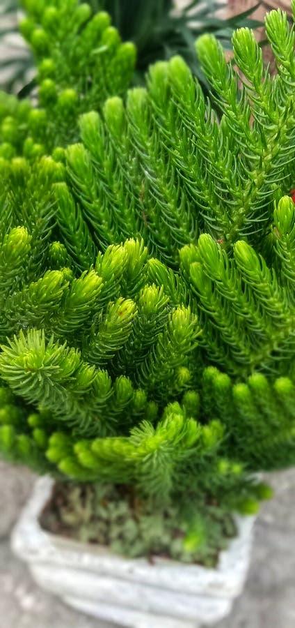 园林植物在屋子里安置并且清洗空调 图库摄影