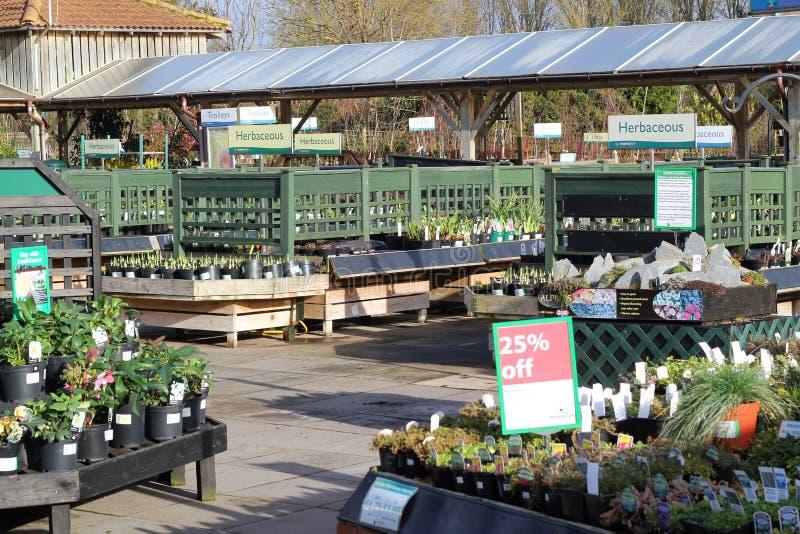 园艺中心工厂待售。 免版税库存图片
