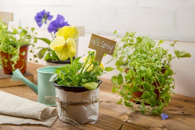 园艺工具、喷壶、种子、植物和土壤在葡萄酒木桌上 反弹在与自由t的庭院概念背景中 库存图片