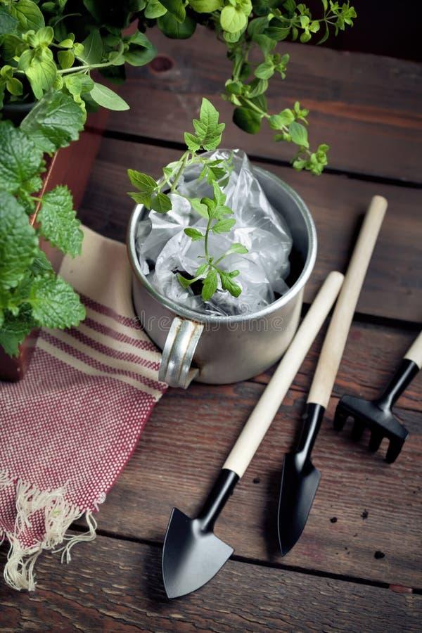 园艺工具和一个罐幼木在庭院棚子 库存图片