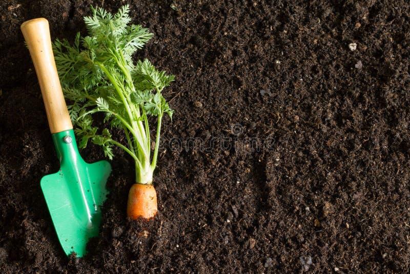 园艺工具和红萝卜在土壤提取春天背景 免版税库存图片