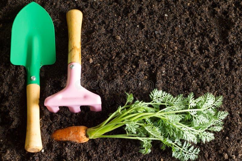 园艺工具和红萝卜在土壤提取春天背景 免版税图库摄影