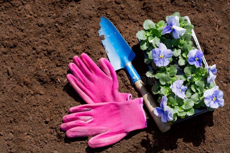 园艺工具和花在土壤背景 免版税库存照片