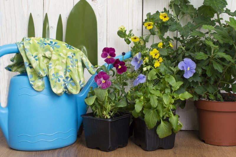 园艺工具和花在大阳台在庭院里 免版税库存图片